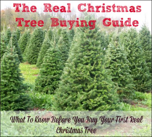 what to know before you buy a real christmas tree