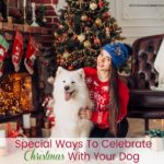 How To Celebrate Christmas With Your Dog